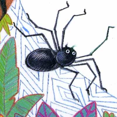 spider+spot-blog